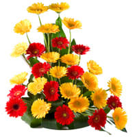 Pretty and Colorful Majestic 30 Mixed Gerbera Arrangement with Pure Passion