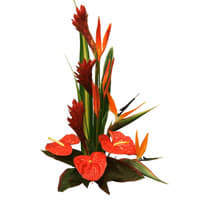 Magnificent Blend of Happiness Birds of Paradise and Anthuriums Arrangement