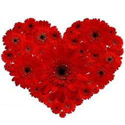 Striking Heart Shape Arrangement of Two Dozen Red Gerberas