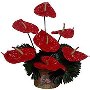 Breathtaking Red Long Lasting Flowers