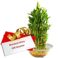 Impressive Selection of Mainland China Gift Voucher of Rs.1000 along with Lucky Bamboo Plant in Bowl