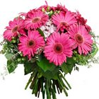 Urbane Bunch of Pink Gerberas to I E Nacharam
