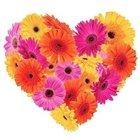 Joyful Emotions Gerberas Premium Heart Shaped Arrangement
