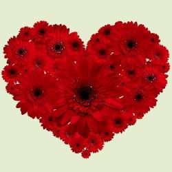 Striking Heart Shape Arrangement of Two Dozen Red Gerberas
