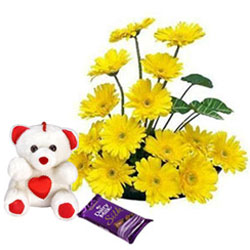 Cute N Soft Teddy with Yellow Gerberas Arrangement N Dairy Milk Silk