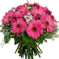 Deliver Online Bunch of Pink Gerberas