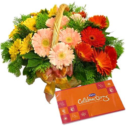 Buy Gerberas Basket N Cadbury Celebration Online