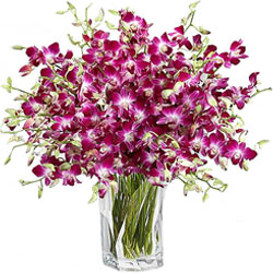 Book Orchids in a Vase Online