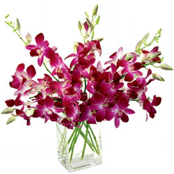 Deliver Online Orchids in a Glass vase